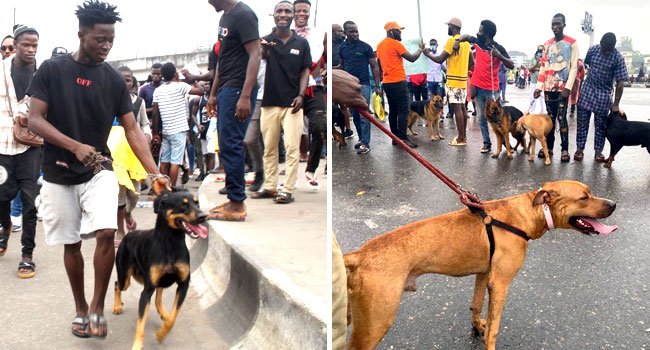 Youths Continue #EndSARS Protest In Surulere, Use Dogs As Guards Eki5yx10