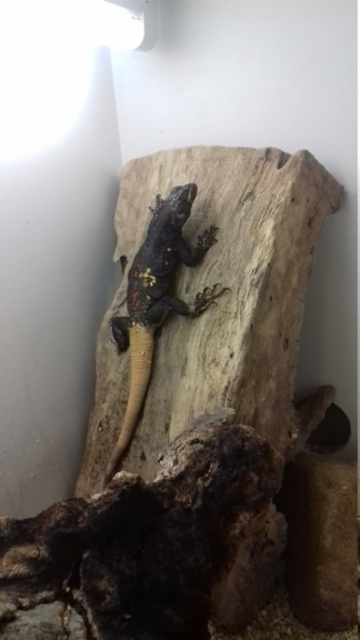 Récit formation CDC Geckobaro 20180620