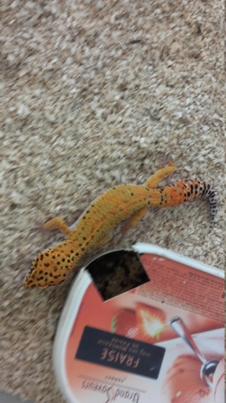 Récit formation CDC Geckobaro 20180717