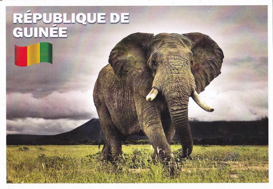 Postales deade Guinea (Julio 2018) Img10
