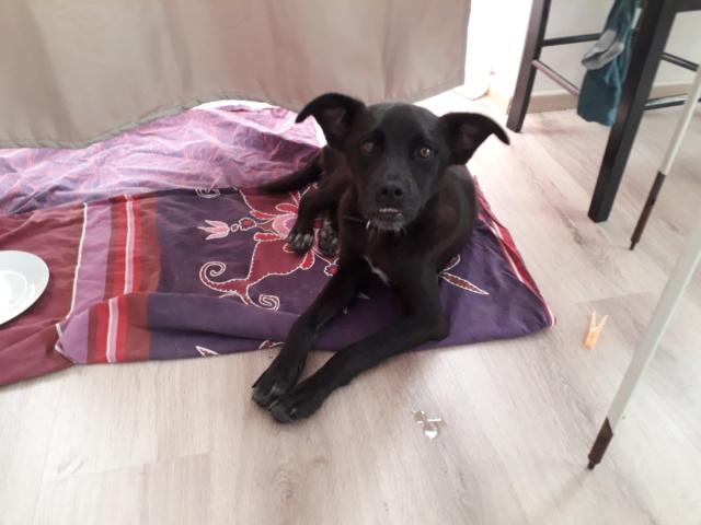 GINGER petit bonbon noir - SERBIE 20180722
