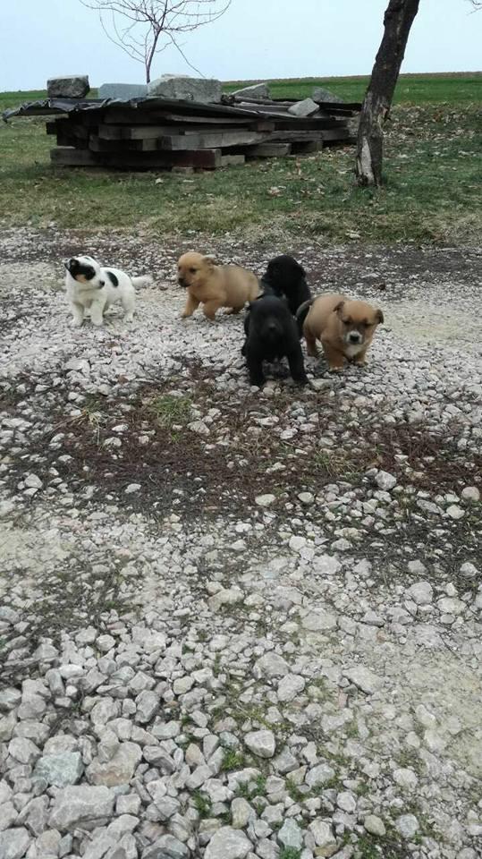 RASTY joyeux petit chien roux en FA dans le dpt 67 - SERBIE 27752110