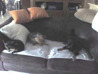 MICI (CRNKA) petite chienne des rues - SERBIE 35887010
