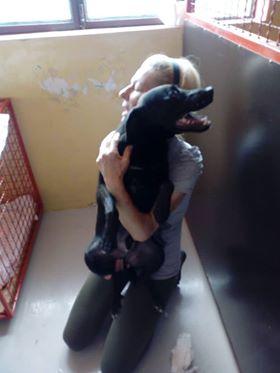 JONNY magnifique croisé labrador noir - en FA dpt 67  36300510