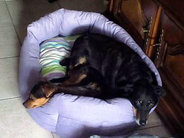 MICI (CRNKA) petite chienne des rues - SERBIE 36375510