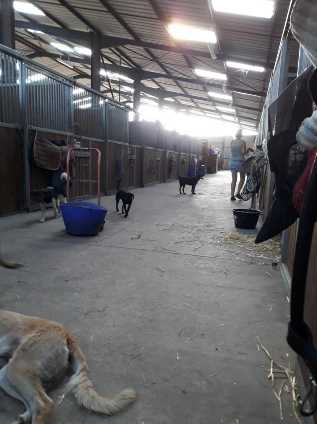 JONNY magnifique croisé labrador noir - en FA dpt 67  36496010