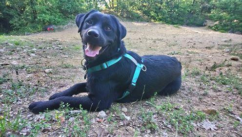 ALIB un chien merveilleux - BULGARIE 36659110