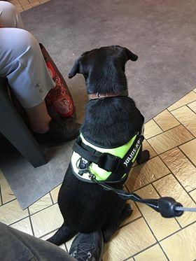 JONNY magnifique croisé labrador noir - en FA dpt 67  37010110