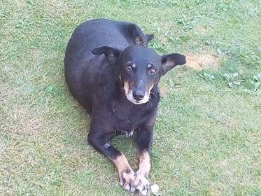 MICI (CRNKA) petite chienne des rues - SERBIE 37291710