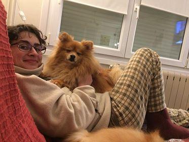 HIPPIE petit spitz cherche nouvelle famille - DPT 59 37296710