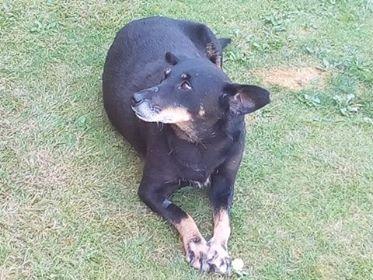 MICI (CRNKA) petite chienne des rues - SERBIE 37307310