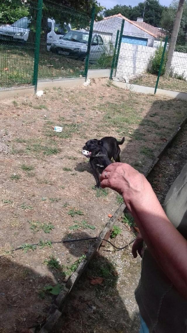 GINGER petit bonbon noir - SERBIE 37328710