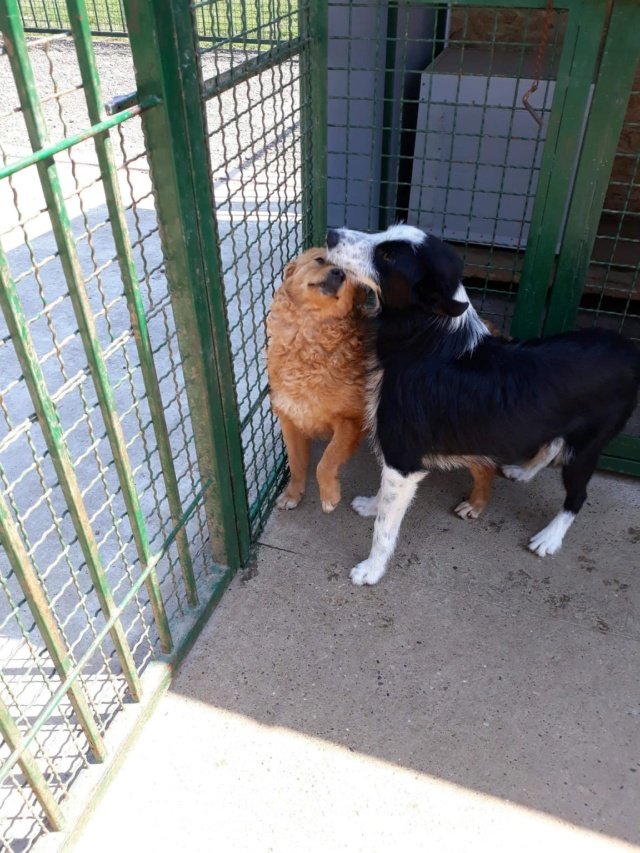 DAISY et SEM couple inséparable - SERBIE 38955113