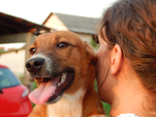 RASTY joyeux petit chien roux en FA dans le dpt 67 - SERBIE 41013710