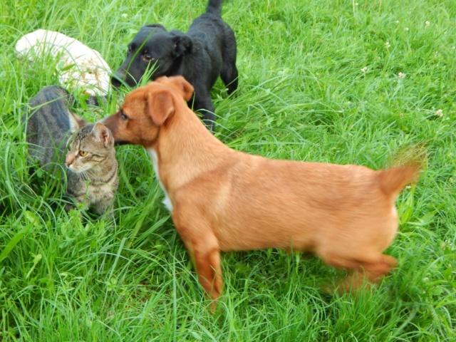 RASTY joyeux petit chien roux en FA dans le dpt 67 - SERBIE 41074910