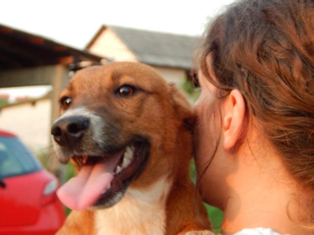 RASTY joyeux petit chien roux en FA dans le dpt 67 - SERBIE 41079310