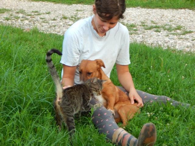RASTY joyeux petit chien roux en FA dans le dpt 67 - SERBIE 41193910
