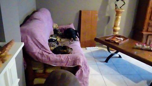 MICI (CRNKA) petite chienne des rues - SERBIE 41871710