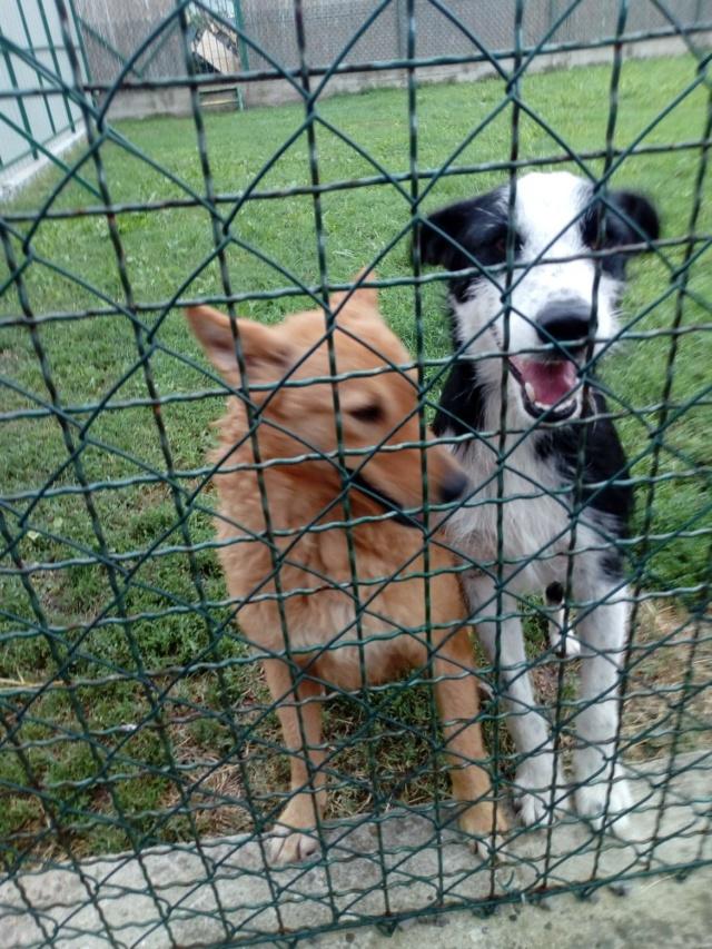 DAISY et SEM couple inséparable - SERBIE 42243610