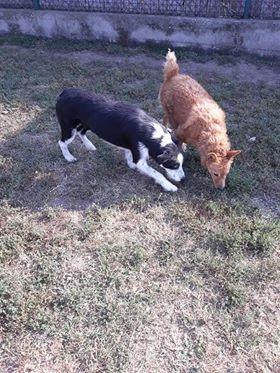 DAISY et SEM couple inséparable - SERBIE 43879110