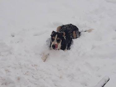 DUNJA une jolie chienne tricolore - SERBIE 48383310