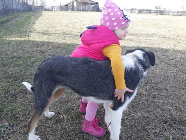 DUNJA une jolie chienne tricolore - SERBIE 51144310