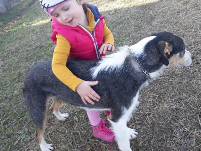 DUNJA une jolie chienne tricolore - SERBIE 51341410