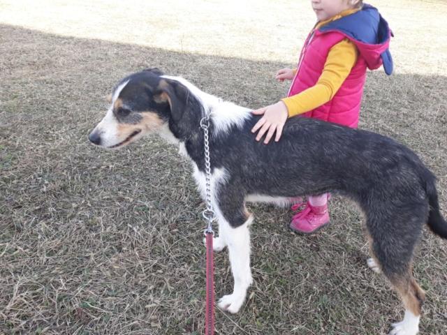 DUNJA une jolie chienne tricolore - SERBIE 51632610