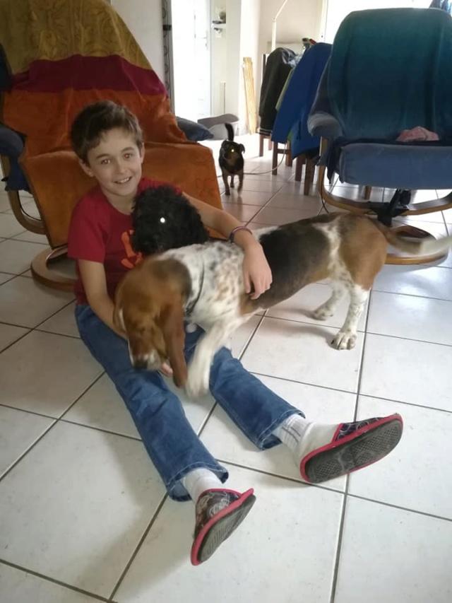 DORA basset hound - SERBIE 52253010