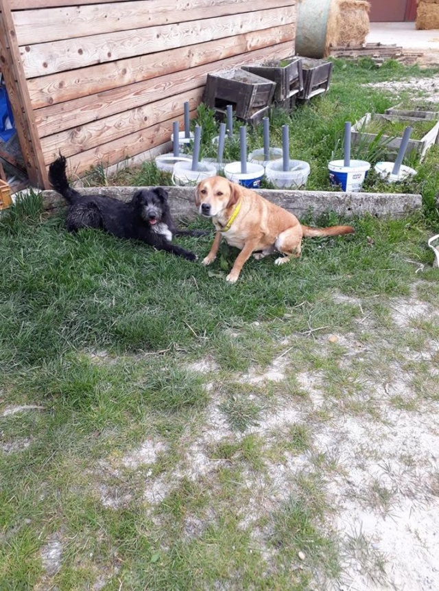 ROSCO un bon chien de famille en FA ds le 67 - SERBIE 55849210