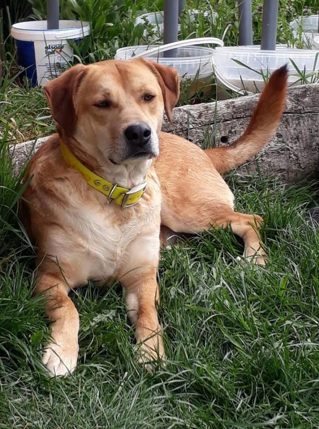 ROSCO un bon chien de famille en FA ds le 67 - SERBIE 55882310