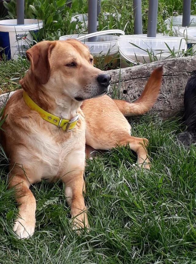 ROSCO un bon chien de famille en FA ds le 67 - SERBIE 55916110