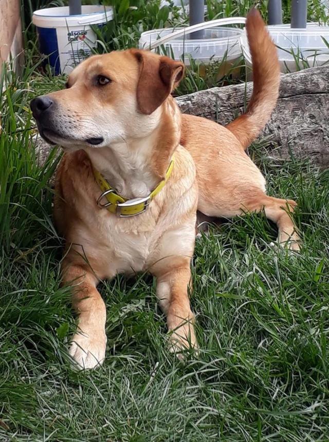 ROSCO un bon chien de famille en FA ds le 67 - SERBIE 56215510