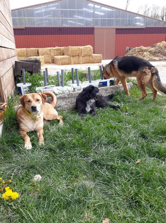 ROSCO un bon chien de famille en FA ds le 67 - SERBIE 56349110