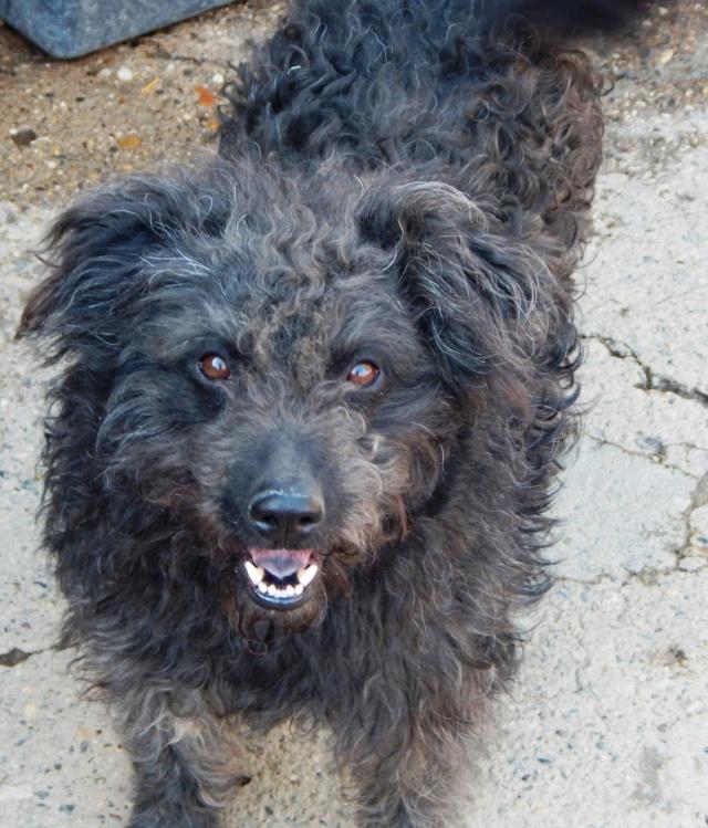 CUPKO croisé chien d'eau - SERBIE 56470410