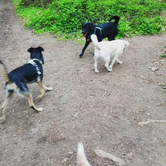 ALIB un chien merveilleux - BULGARIE 56542010