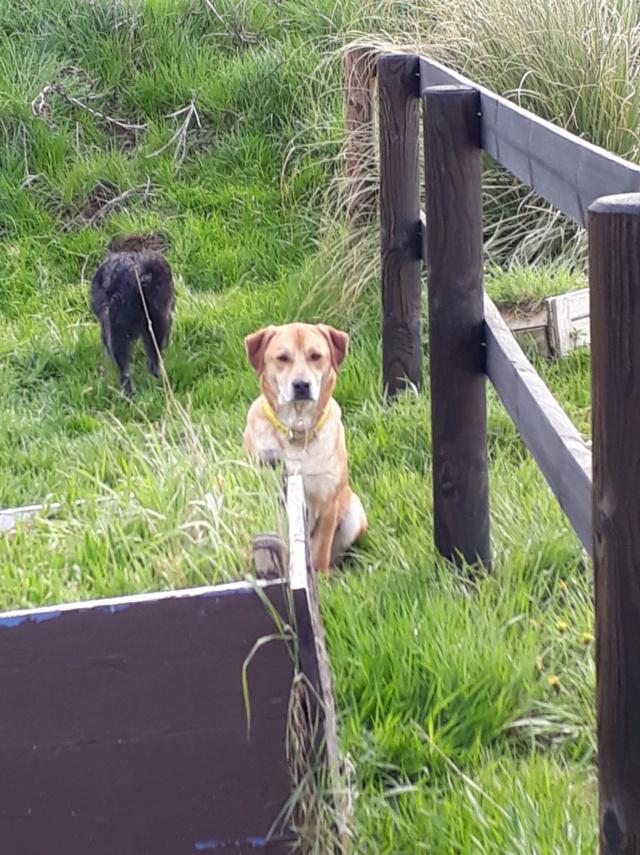 ROSCO un bon chien de famille en FA ds le 67 - SERBIE 56835710