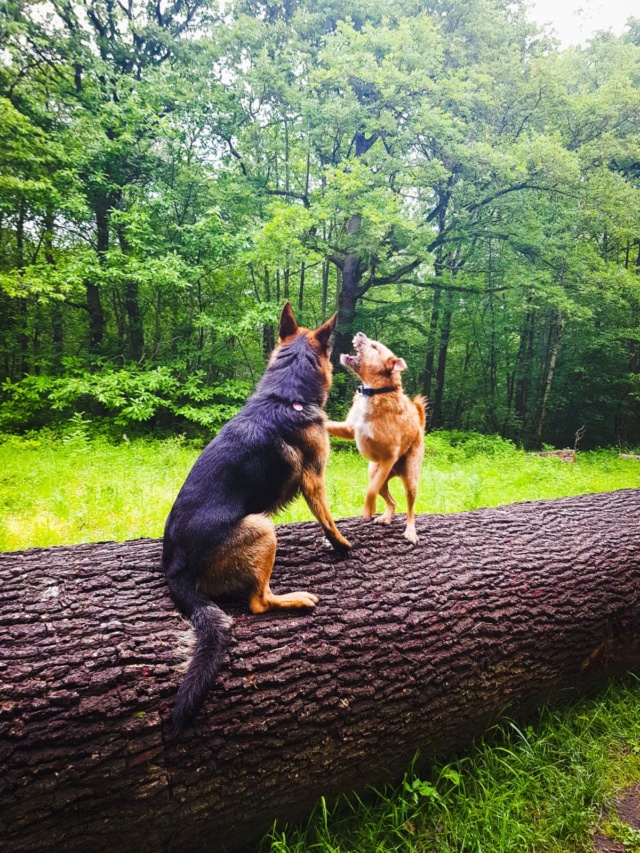 VICTOR un chien en grande souffrance - BULGARIE 59285411