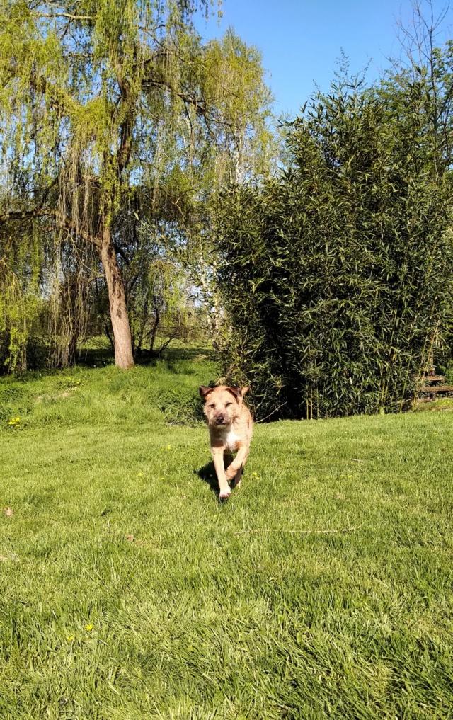 VICTOR un chien en grande souffrance - BULGARIE 59623110