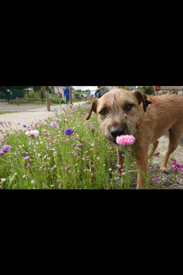 VICTOR un chien en grande souffrance - BULGARIE 59859310