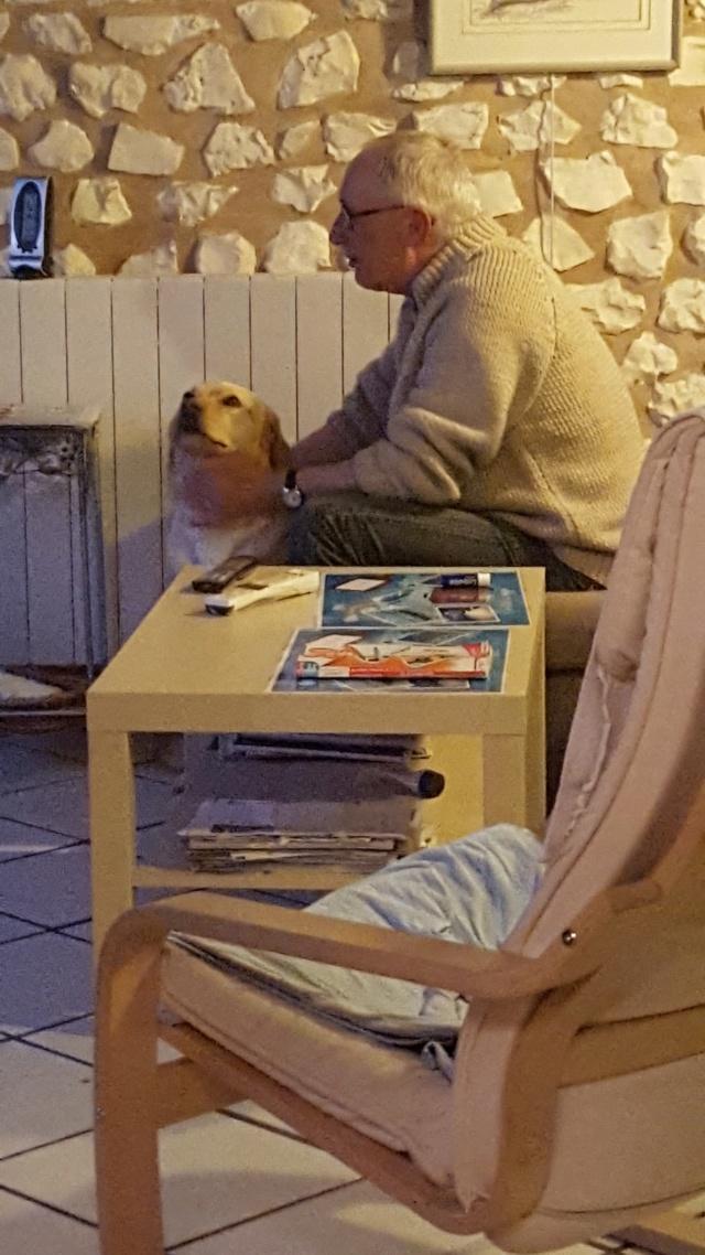 ABYSS une bonne louloute labrador - SERBIE 59943910