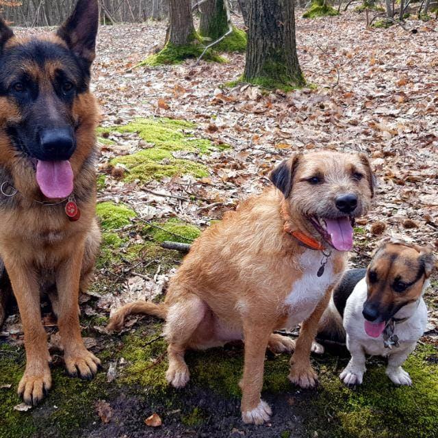 VICTOR un chien en grande souffrance - BULGARIE 59945610