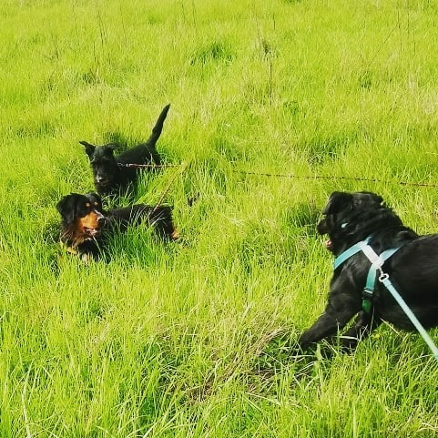 ALIB un chien merveilleux - BULGARIE 60143210