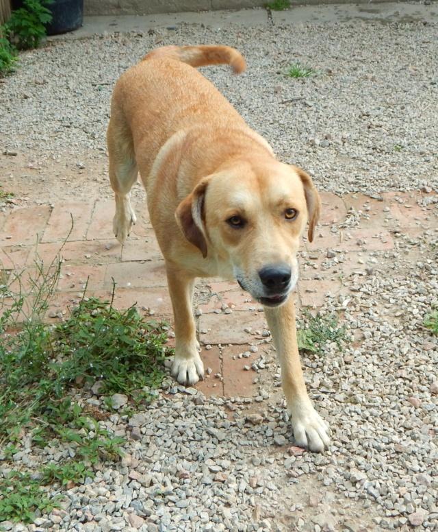 ROSCO un bon chien de famille en FA ds le 67 - SERBIE Dscn1512