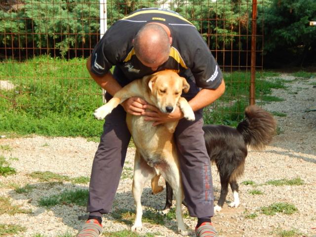 ROSCO un bon chien de famille en FA ds le 67 - SERBIE Dscn1614