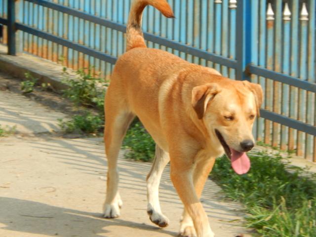ROSCO un bon chien de famille en FA ds le 67 - SERBIE Dscn1714