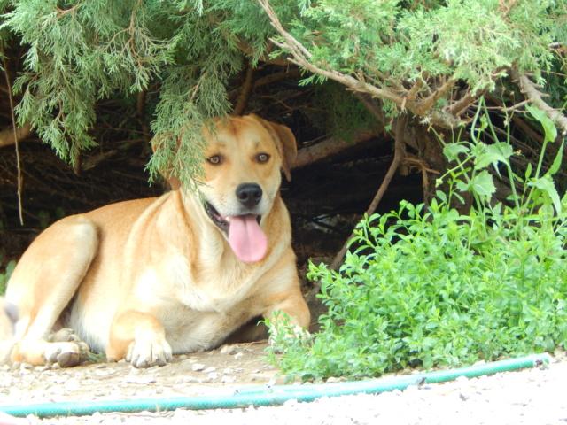 ROSCO un bon chien de famille en FA ds le 67 - SERBIE Dscn1715