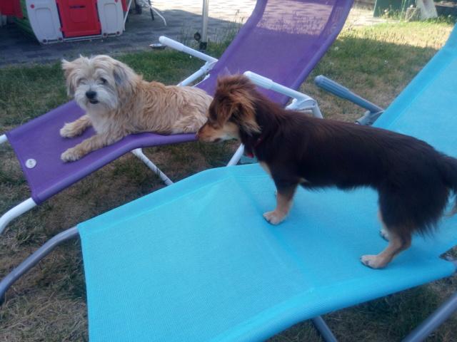 CHOUPETTE un petit chien de poche ! - BULGARIE Img_2012