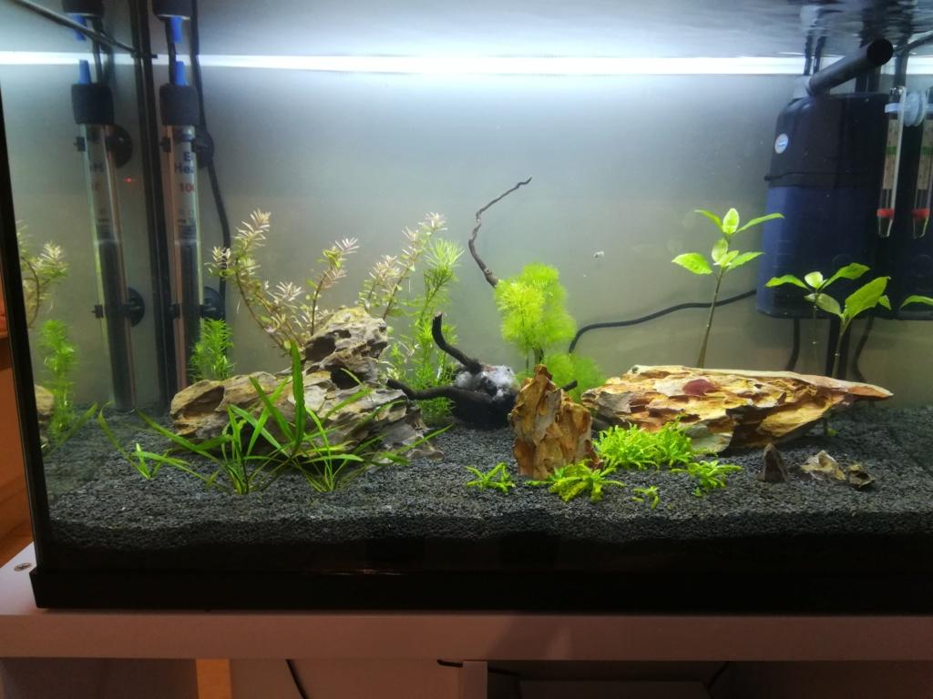 70L premier aquarium Img_2014