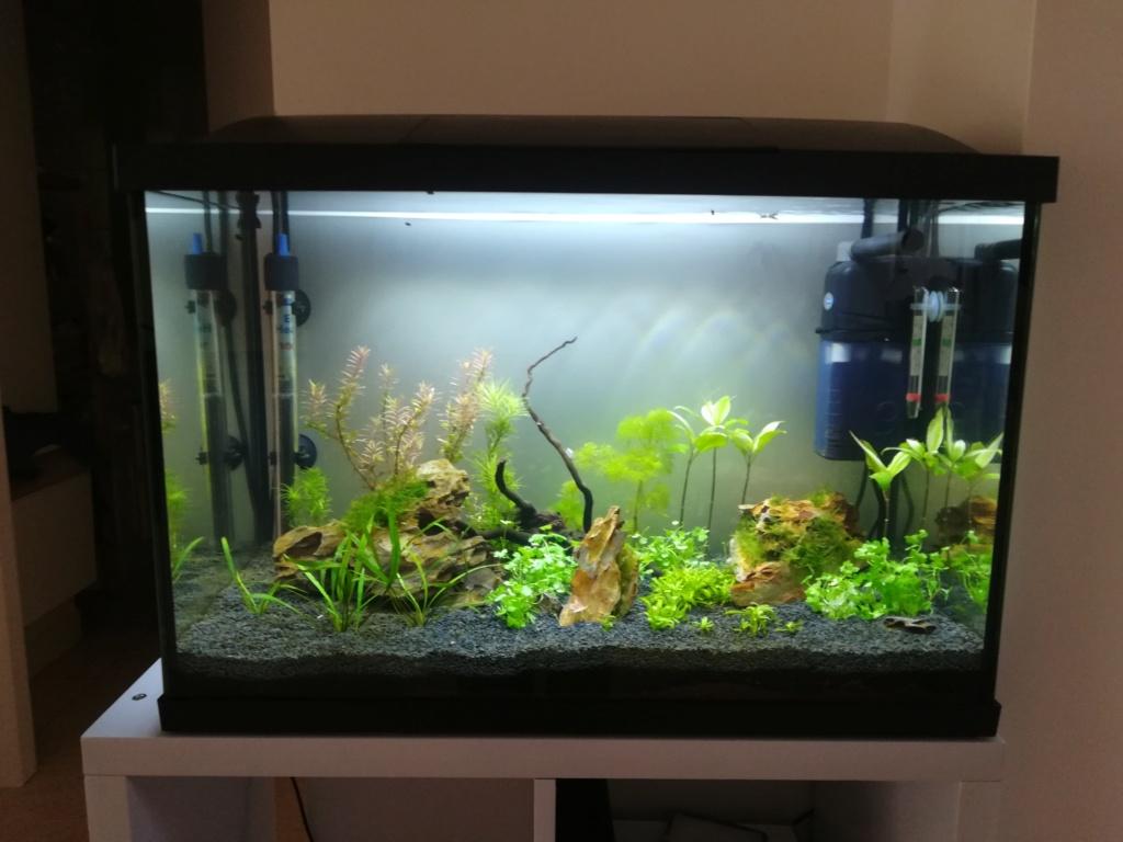 70L premier aquarium Img_2015
